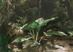 Skunk Cabbage by Andrew Wyeth